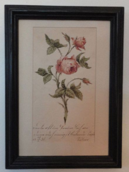 Princess Victoria of Saxe-Coburg Pen & Ink Drawing of a Rose to Countess Kohary